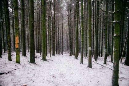 Kánikula után, késő tél a tavaszban! Mi vezetett idáig, érkezik-e még hideg és csapadék?