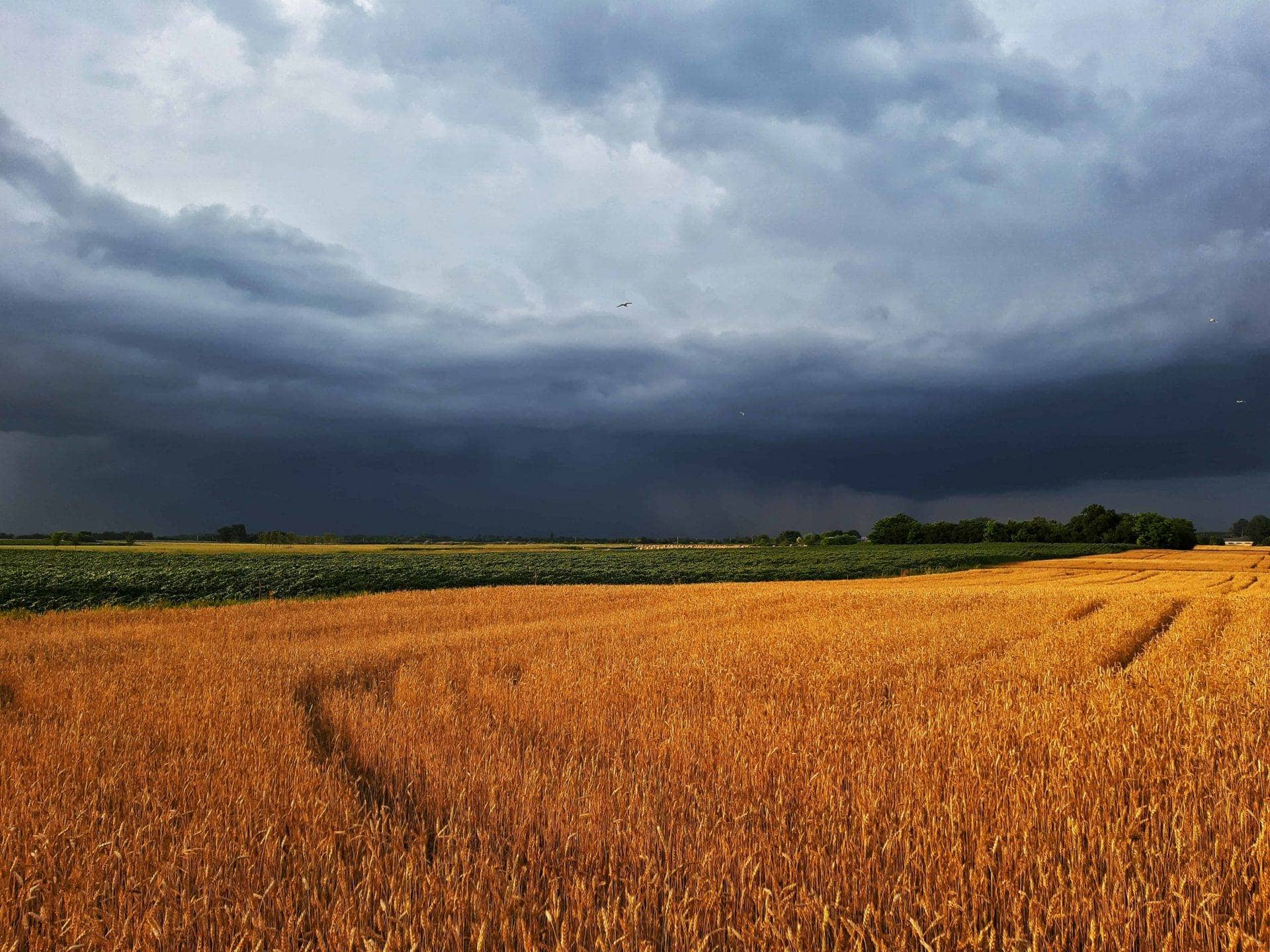 Nem kedvezett az időjárás a mezőgazdaságnak! 9