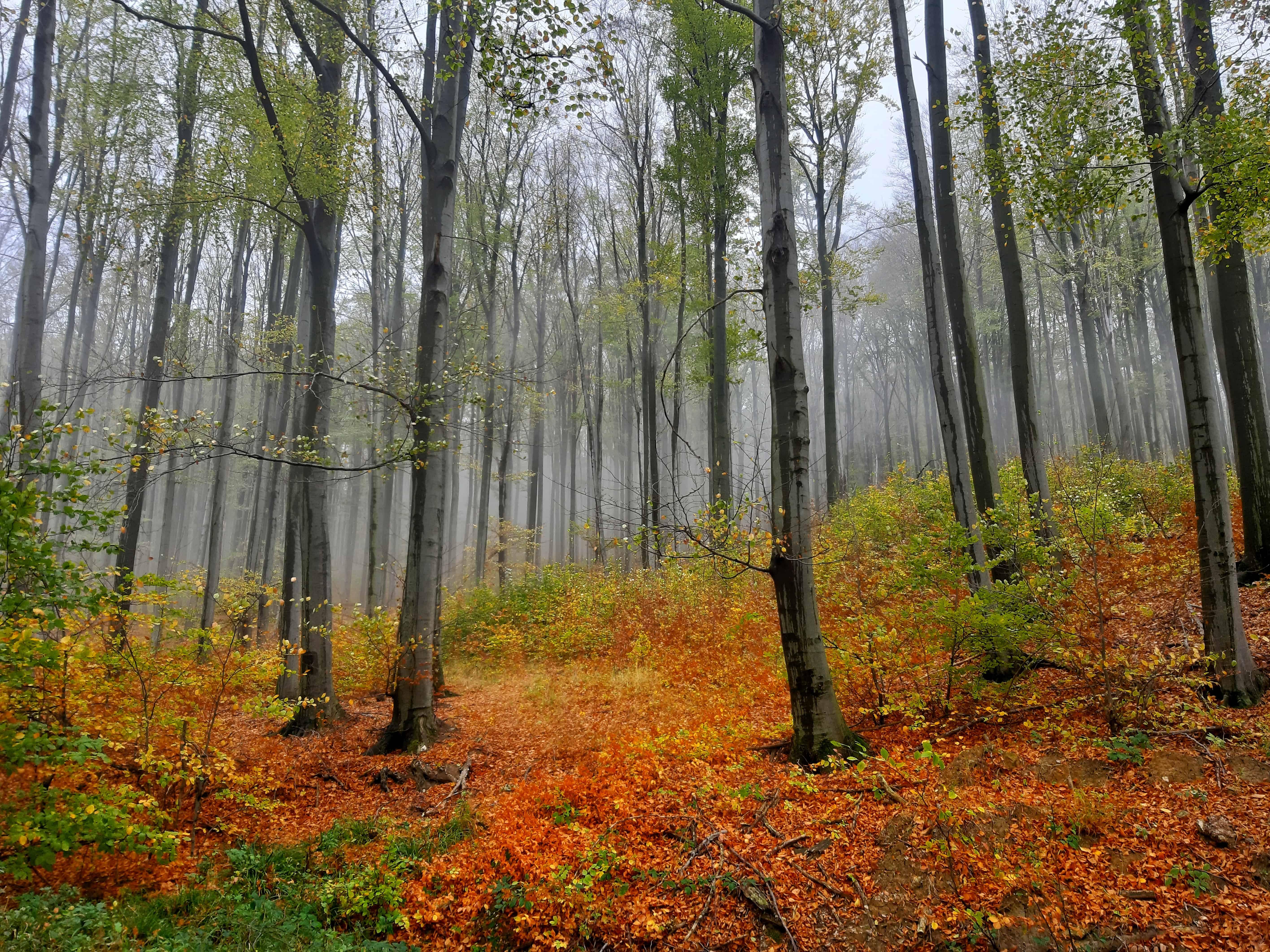 Hangulatos őszi videó a felhőbe bújt Mátrából!