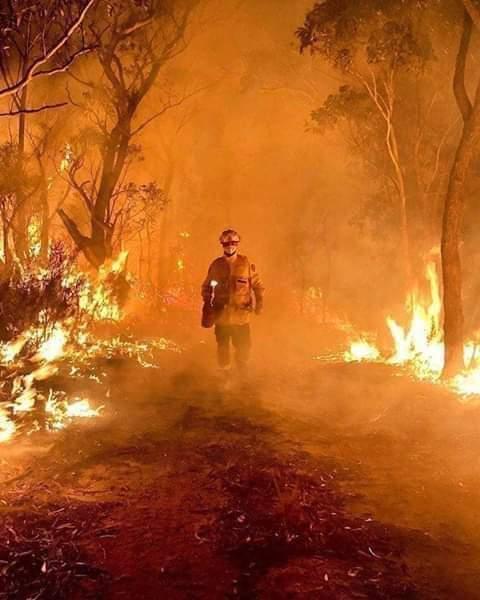 Az állatok is menedéket keresnek a tűz elől Ausztráliában!(videó) 6