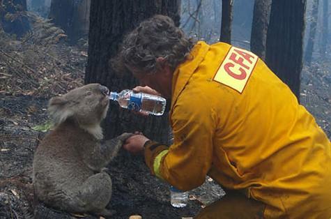 480 millió állat pusztulhatott már el a hónapok óta tartó bózottüzek miatt! 5