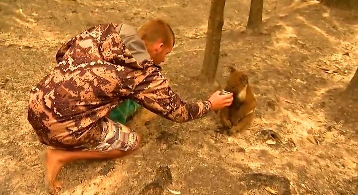 Megrázó felvétel! Patrick Boyle napok óta menti a koalákat Ausztráliában! 9
