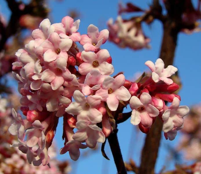 Csopakra beszökött a tavasz! 7