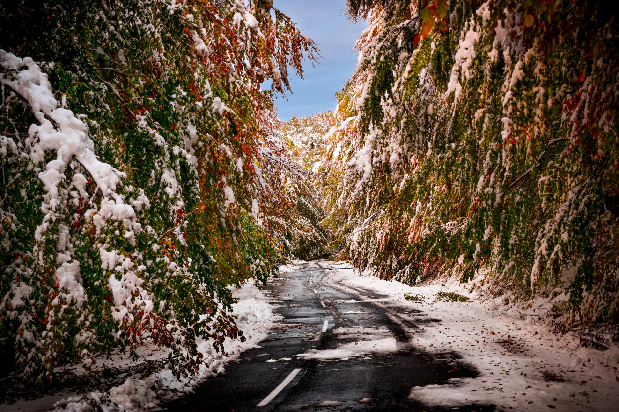 Életveszélyes utak, 43cm hó, letarolt erdő! (Képek) 1