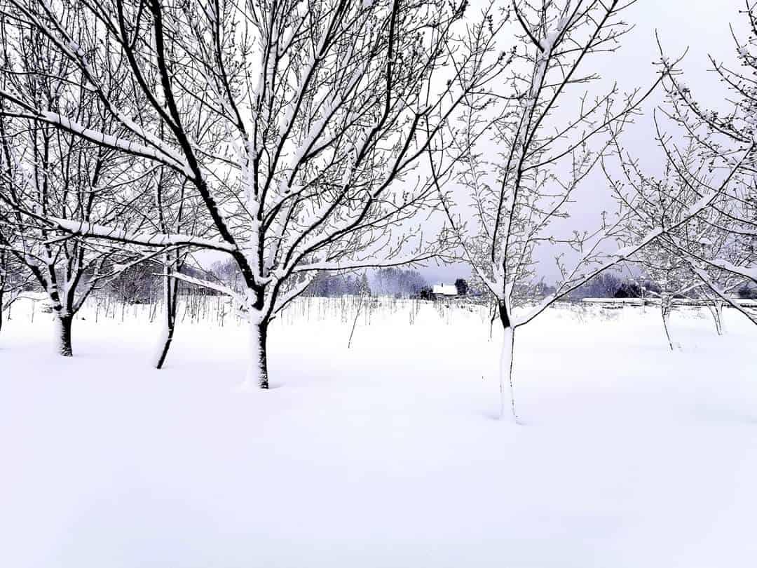 30cm-es hó hullott délnyugaton és messze még a vége!(képek) 6
