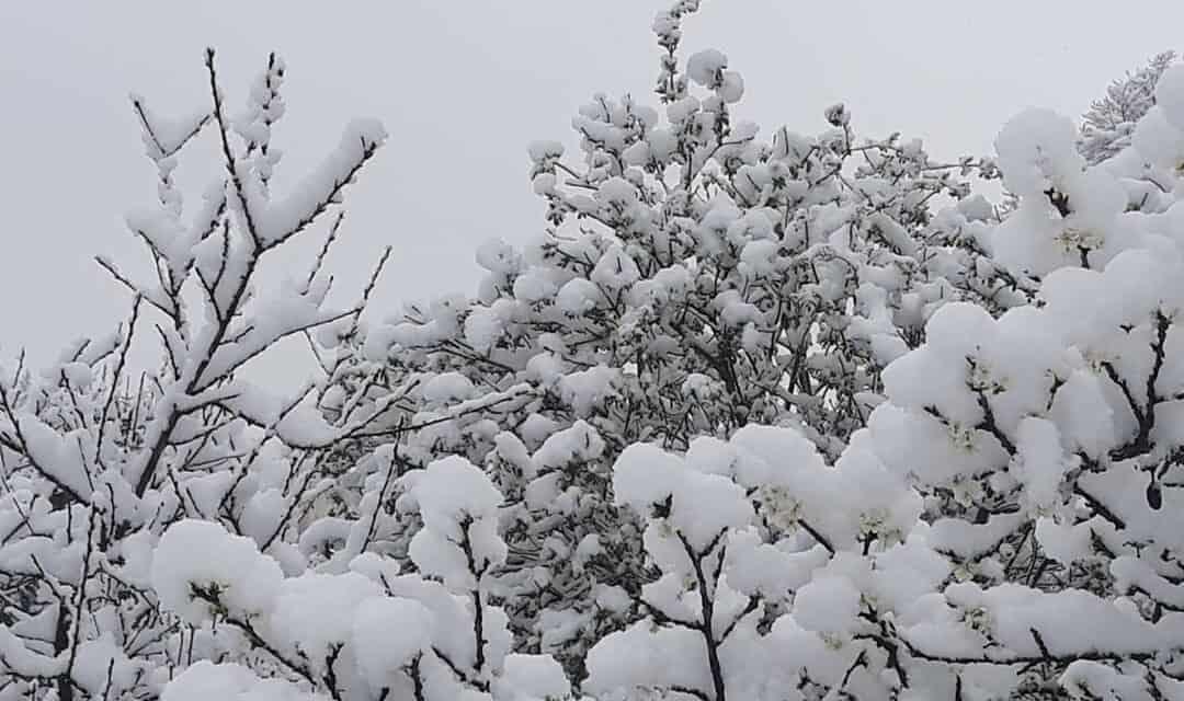 Tél tábornok ma még kitart, majd jön a tavasz !