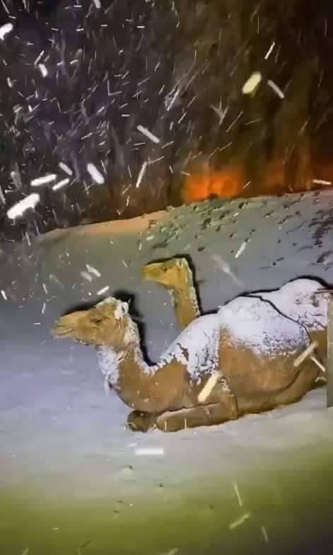 Hóvihar Szaúd-Arábiában! (Képek, videó) 7