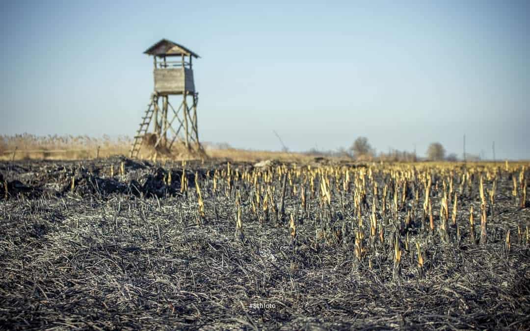 120 hektár nádas égett le a Balatonnál!(Képek) 6