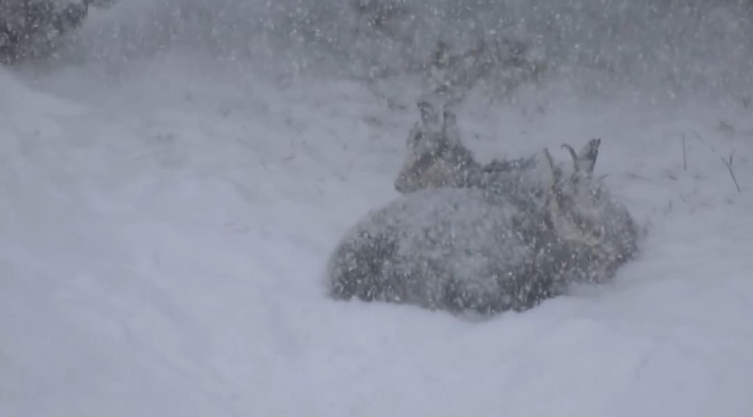 Ömlik a hó az olasz Alpokban! 8