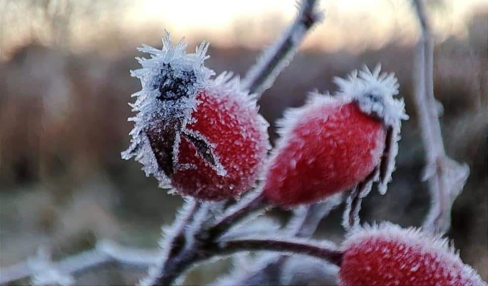 Újabb fagyos éjszaka következik: -8 fokos hideg is lehet! 6