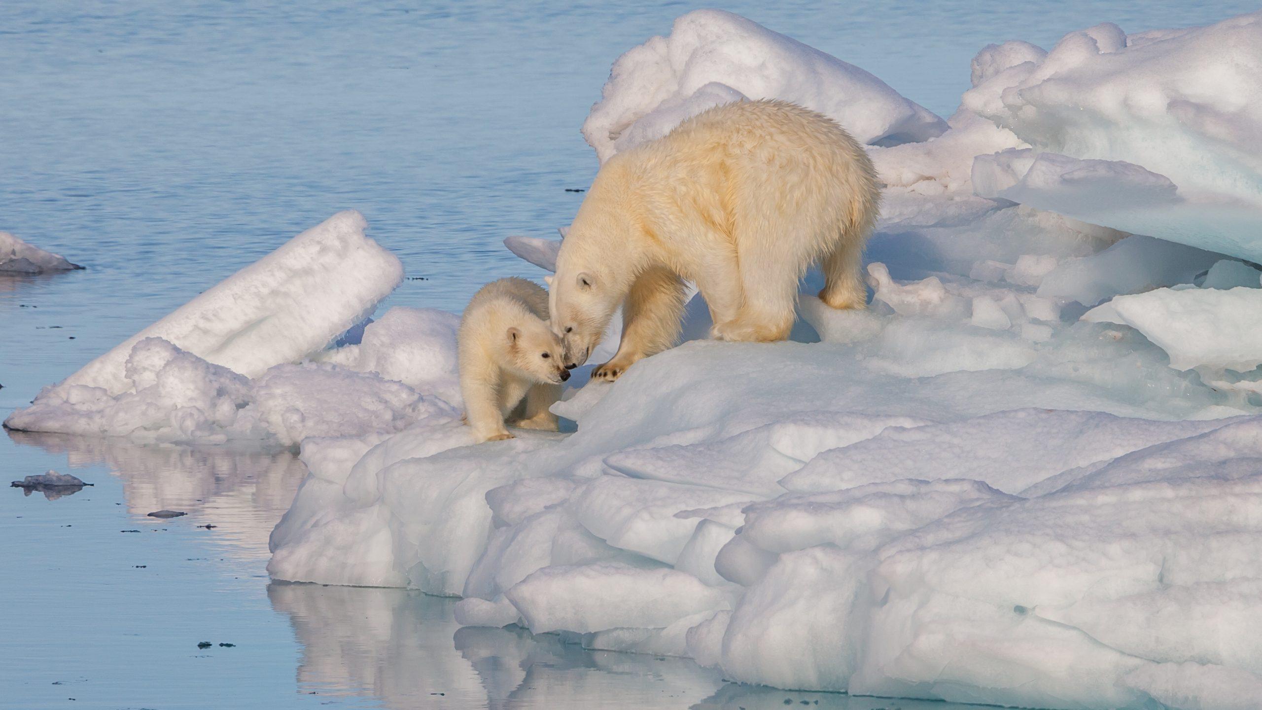 Rekord alacsony szinten az Északi-sarki jégborítottság! - Az Északnyugati-átjáró megnyílt! 10