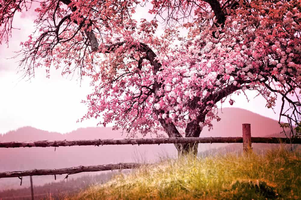 Itt a tavasz: holnap 20 fokra van kilátás! ☀️😍 1