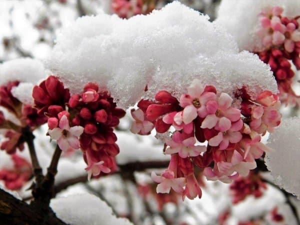 Fagyveszély: ezeken a vidékeken fagyhat el minden éjszaka! Hóviharok is jönnek! 9