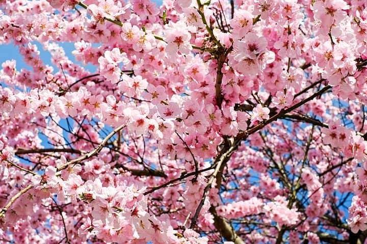 Tombol a márciusi tavasz! 🌹 A Dunántúlon 18-19 fok! 8