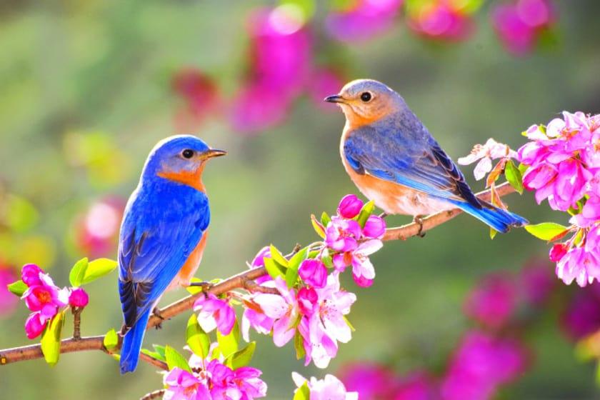 Berobban az álom tavasz: 18-20 fok is lehet! 4