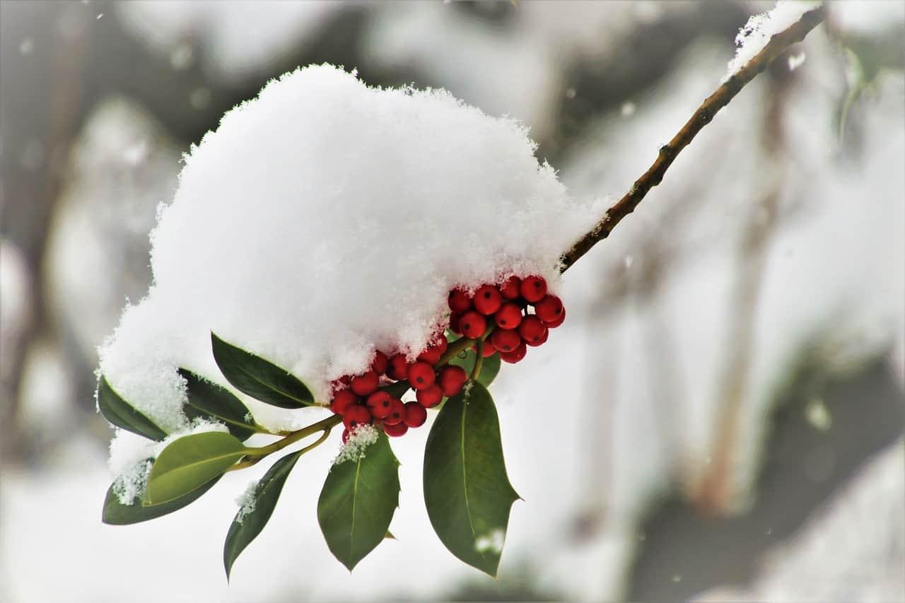 Ismét hidegrekord dőlt! 🥶 8